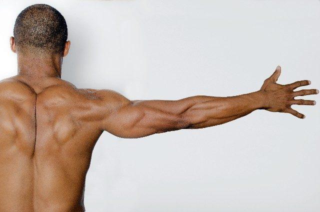 【セミナー情報】12月17日(土)筋肉に効かせるための機能解剖学&トレーニングテクニック