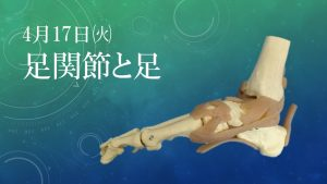 基礎から学ぶ機能解剖学 第7回~足関節と足~ @ 都内 調整中