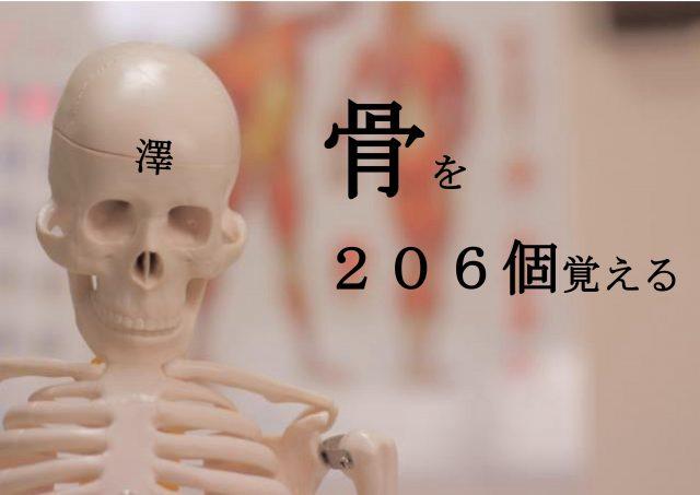 【セミナー情報】基礎から学ぶ機能解剖学 第9回~骨を206個覚える~